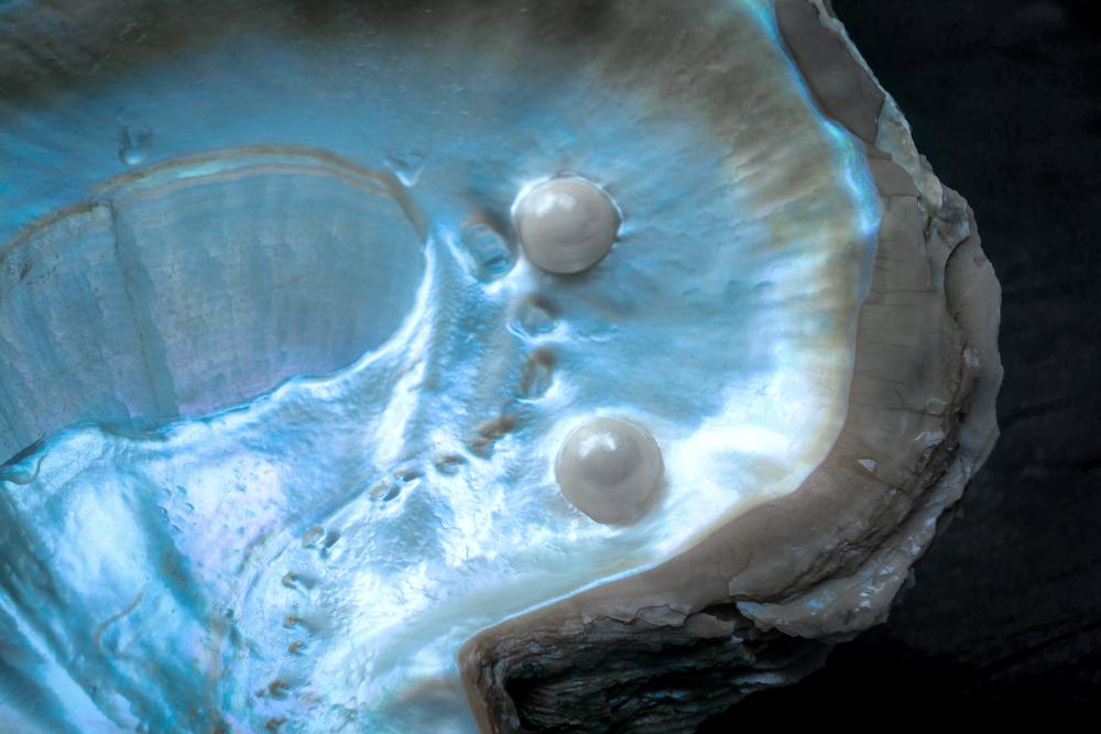 Zwei Perlen in einer Perlmuschel